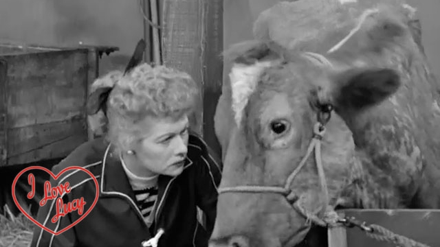 I Love Lucy - How Now Brown Cow