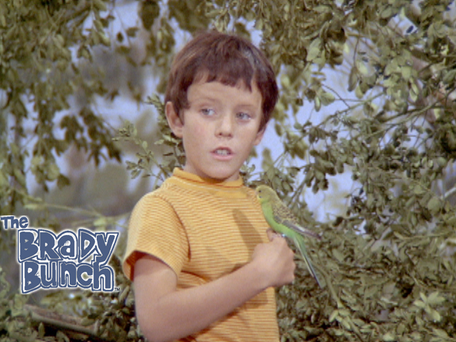 The Brady Bunch - What Goes Up