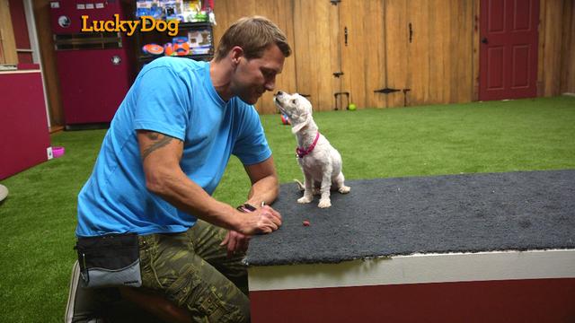 Lucky Dog Show On Cbs