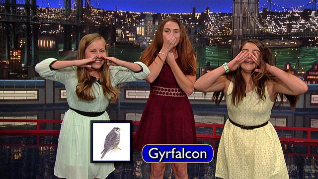 The Late Show: David Letterman - Piedmont Bird Callers: Gyrfalcon