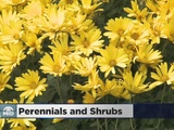 Accentuate Your Fall Foliage With Perennials