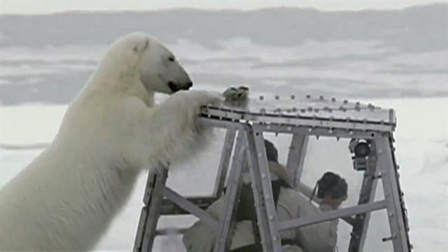 CBS This Morning: Polar bear gets too close for comfort