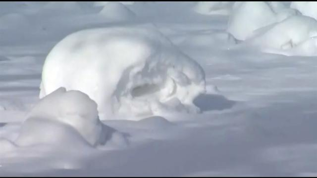 U.s.: Snow rollers fascinate Vermont residents