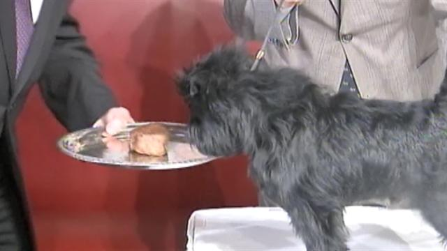 U.s.: Westminster's top dog dines on steak in NYC
