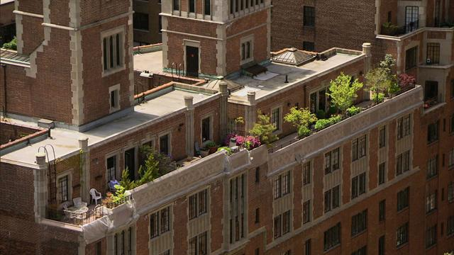 Sunday Morning: Gardens in the New York sky