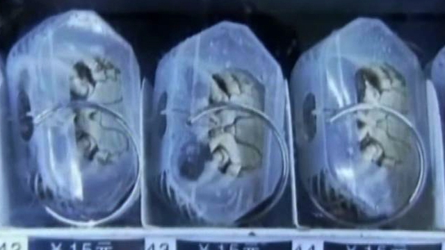 Chinese Vending Machine Sells Live Crabs