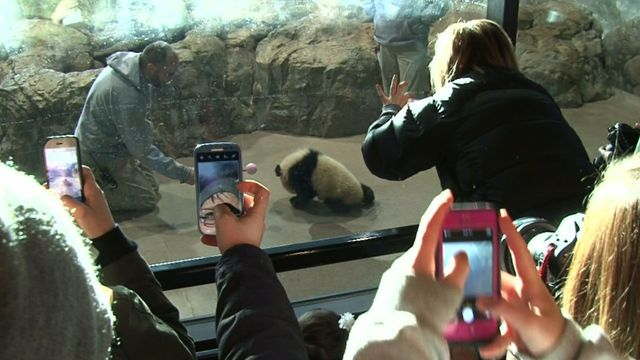 "Panda cub Bao Bao draws hundreds of entries for zoo's first ""InstaMeet"""
