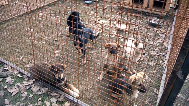 Activists angry over Russian order to kill stray dogs in Sochi