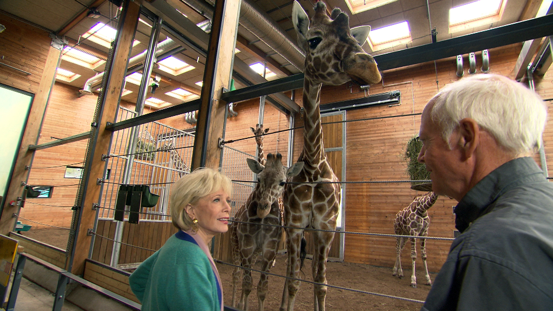 Watch 60 Minutes: Matchmaking for zoo animals - Full show on CBS All Access