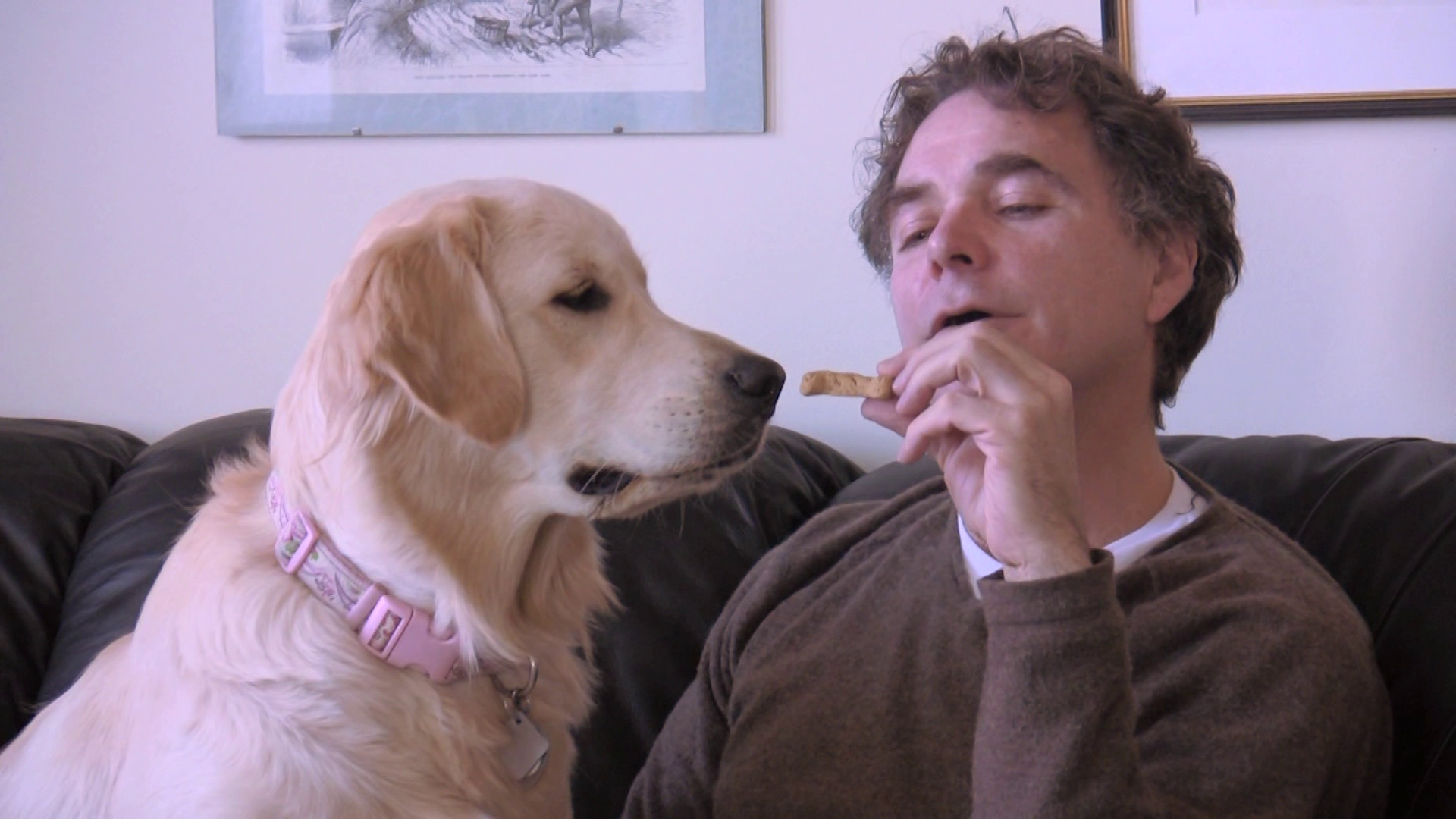 Life and Love Lessons from Man's Best Friend