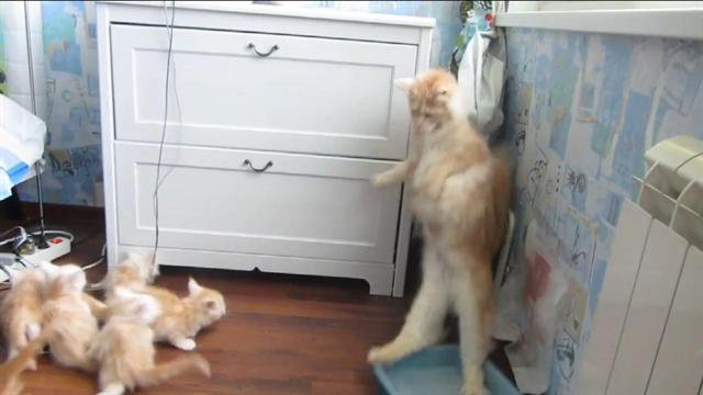 Weird cat behavior freak out
