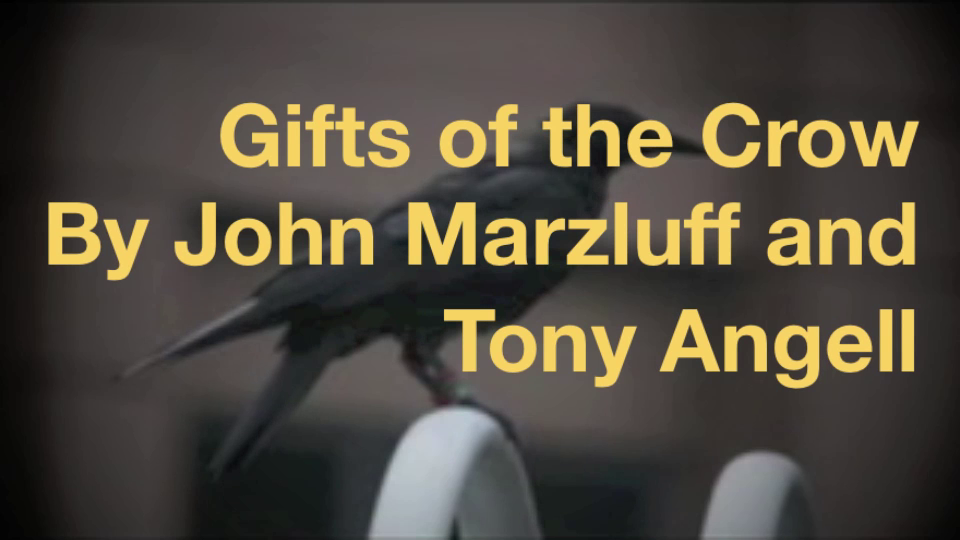 John Marzluff Shows How Crows Will Recognize You