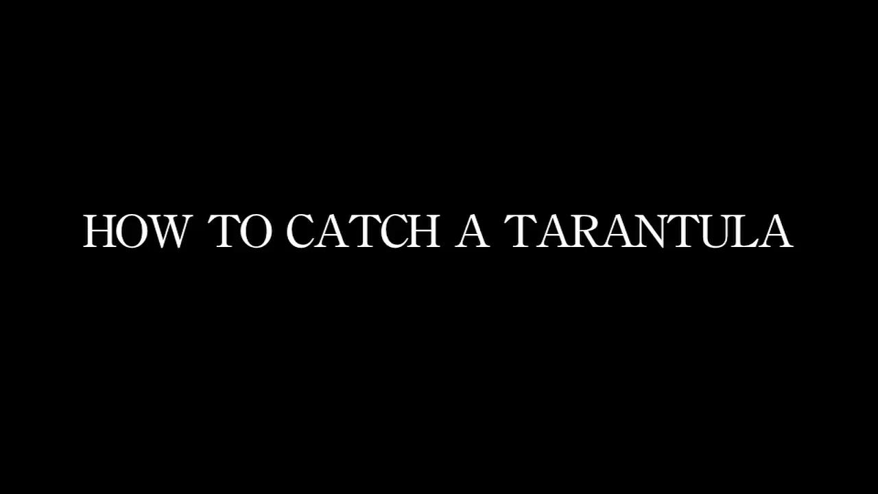 How to Catch a Tarantula