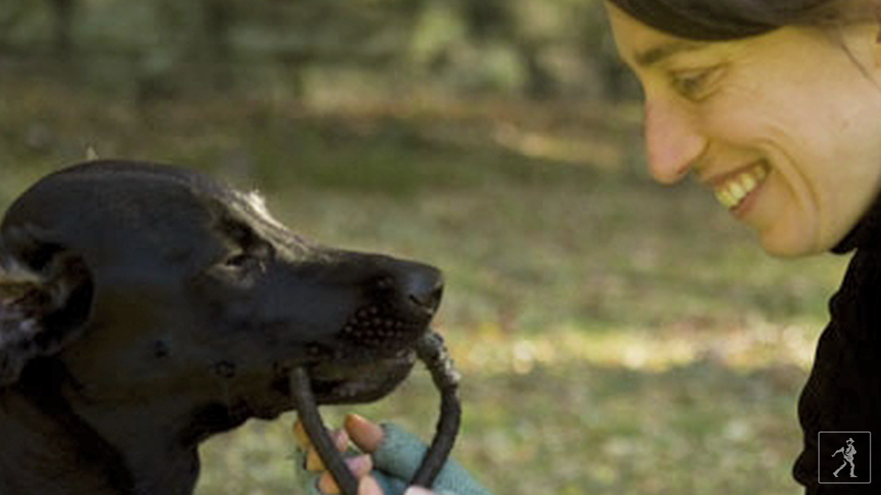 Learn to understand your dog with author Alexandra Horowitz