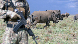 60 Minutes - Friendly Fire, The Rhino Crisis