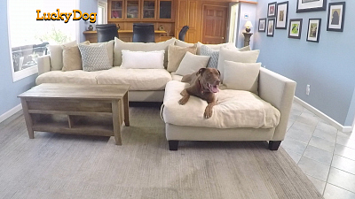 Lucky Dog - Yogi