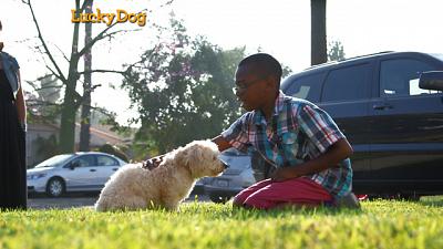 Lucky Dog - Randy