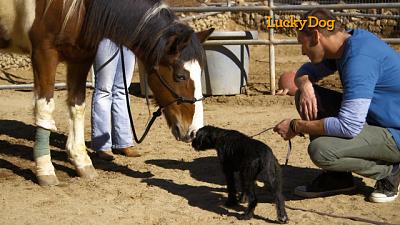 Lucky Dog - Roxy