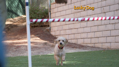 Lucky Dog - For Every Problem, There's a Solution