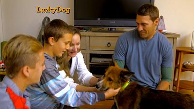 Lucky Dog - CoCo