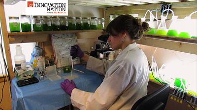 Innovation Nation - Algae Girl