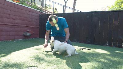 Lucky Dog - Zeus