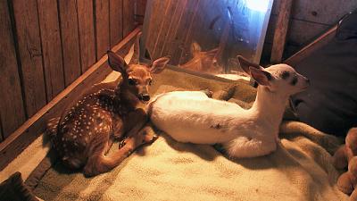 Hope in the Wild - Deerly Beloved