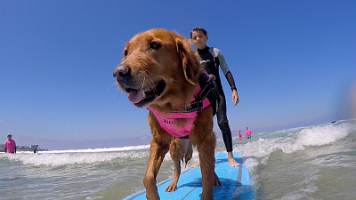 Tails of Valor - Surf's Pup!