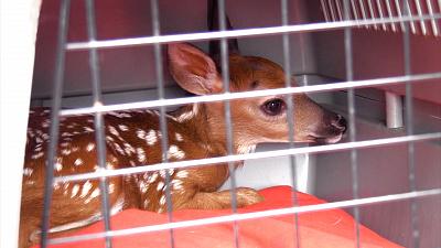 Hope in the Wild - Oh Deer