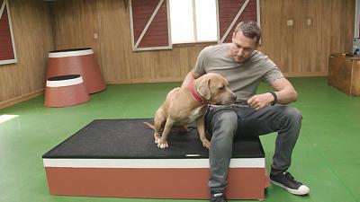 Lucky Dog - Rainey