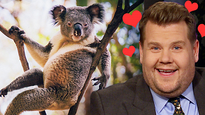 The Late Late Show with James Corden - James Corden Has a Thing for the Hot Koala