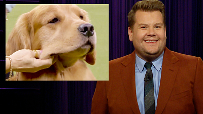 The Late Late Show with James Corden - We're Angry About Daniel the Golden Retriever's Loss
