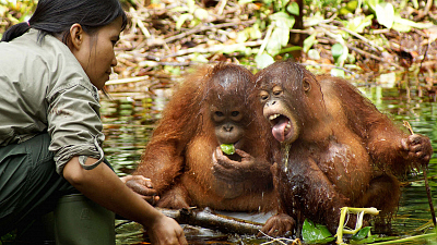 Orangutan Jungle School - Tots, Teens and Tantrums