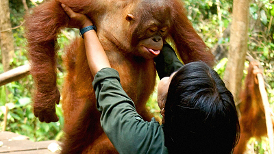 Orangutan Jungle School - Handle With Care
