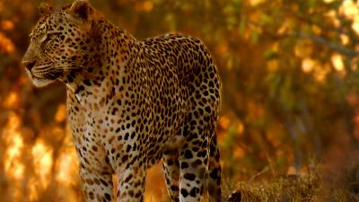 Africa's Wild Havens - Marula Tree