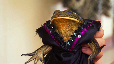 America Wild and Wacky - Frog Beauty Pageant