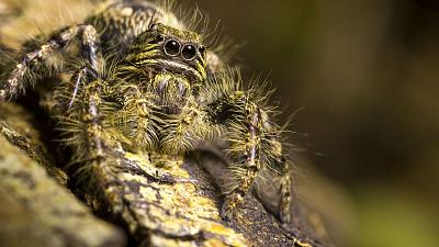 Crazy Monster - Spiders
