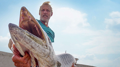 Fishing for Giants - Giant Barracuda