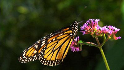 Garden Secrets - Pollinator Power