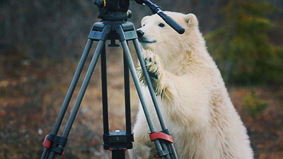 Polar Bear Town - Paparazzi Alert