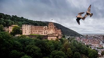 Wild Castles - Heidelberg