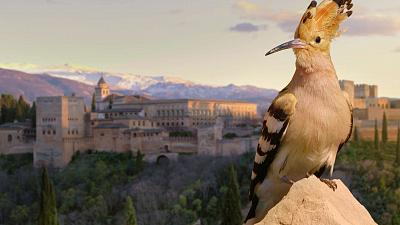 Wild Castles - Alhambra