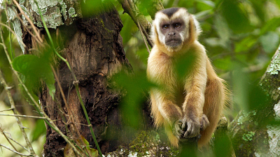 Brazil Untamed - Monkey Garden