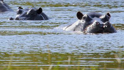 Africa's Wild Horizons - The Kalahari