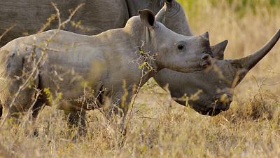 Africa's Wild Horizons - Swaziland