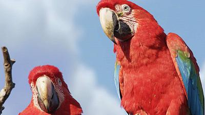 Brazil Untamed - Bird Paradise