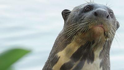 Brazil Untamed - Giant Otter Refuge
