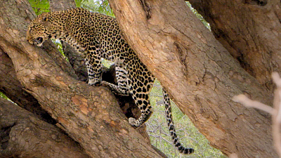 Extreme Africa - Lake Manyara National Park