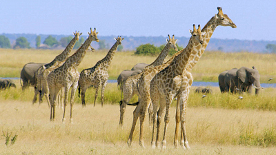 Great Parks of Africa - Chobe: Land of Learning
