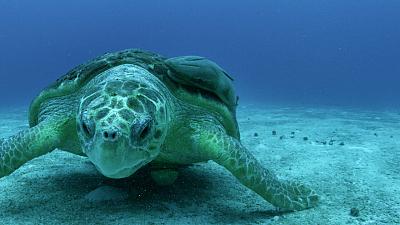 Great Blue Wild - Bahamas